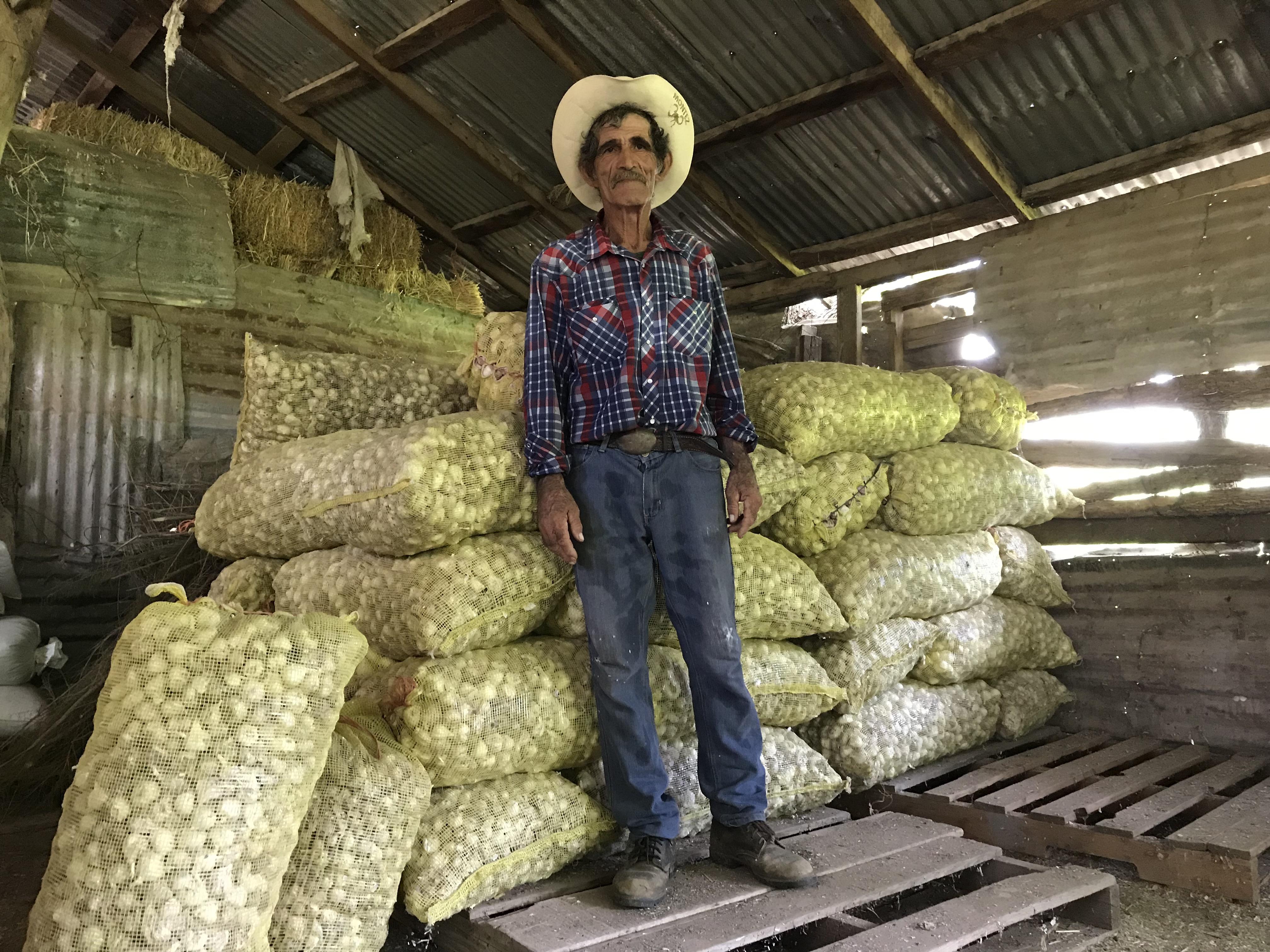 Productores de ajos en Tahuichopa.