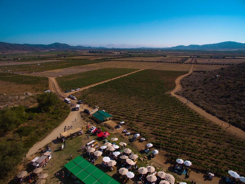 Italianos quieren exportar vino del Valle de Guadalupe