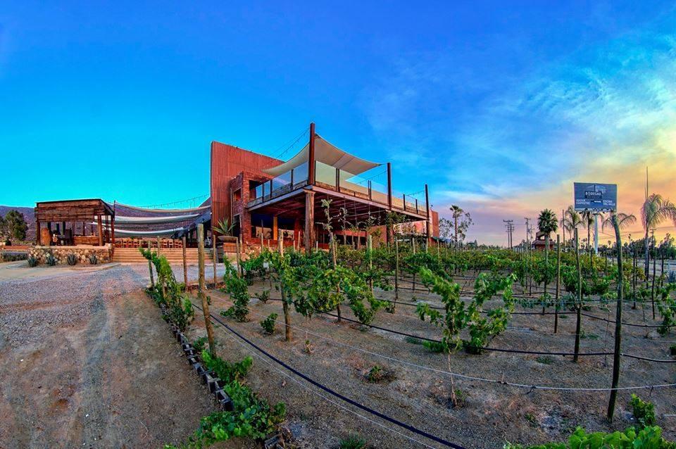 Israelíes tratarán el agua para regar los viñedos de Valle de Guadalupe