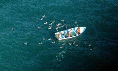 Frenan con totoaba de laboratorio su extinción en el Mar de Cortés