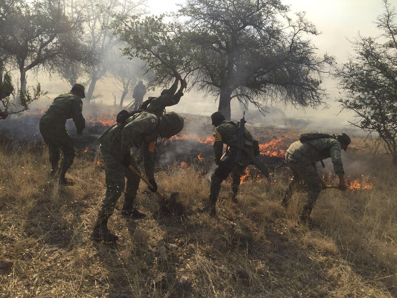 Incendios consumen 14 mil hectáreas de cerros y montañas Baja California
