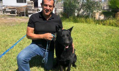 Jorge Hank Rohn rescata en un criadero a la raza de perro lobo mexicano