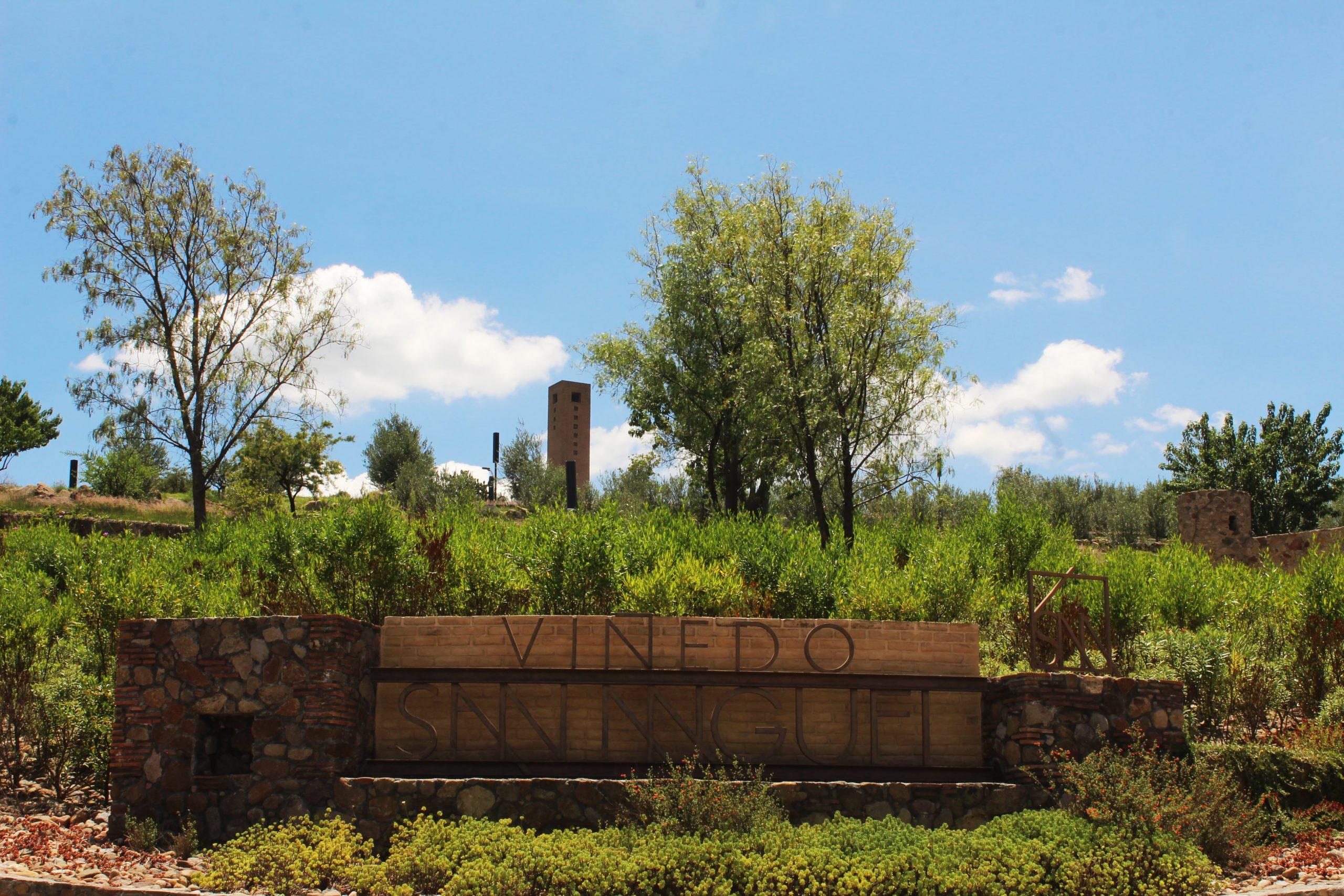 viñedos Guanajuato