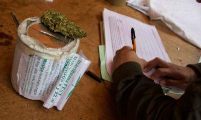 mariguana despenalización
