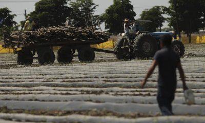 El gobernador de Guanajuato no deja solos a los productores del campo: empresarios