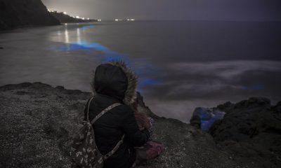 bioluminiscencia Tijuana