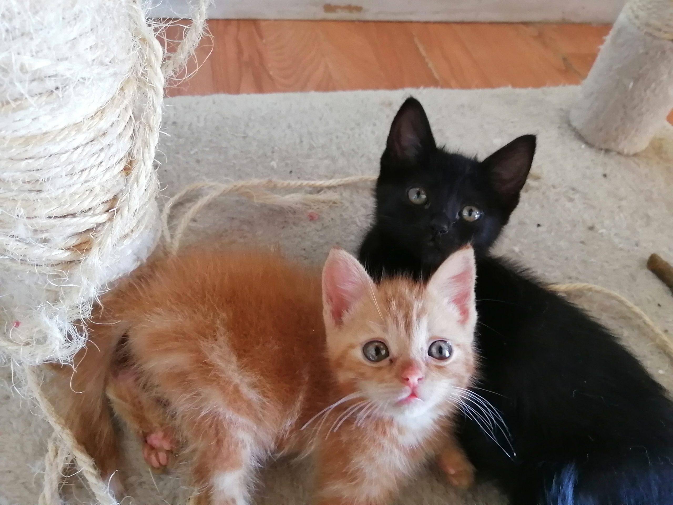 gatos y yoga