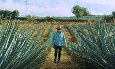 Tequila de Guanajuato protagonizará Destilando México