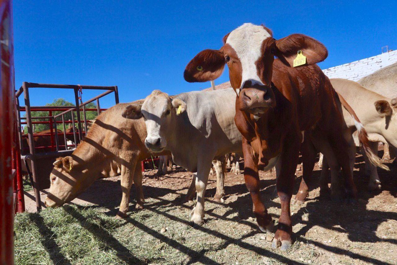 ganaderos Chihuahua