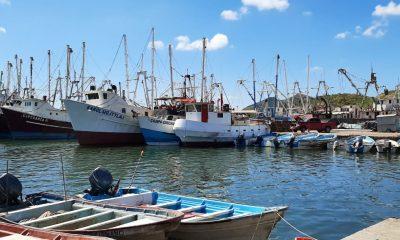 embarcaciones pesca camarón Sonora