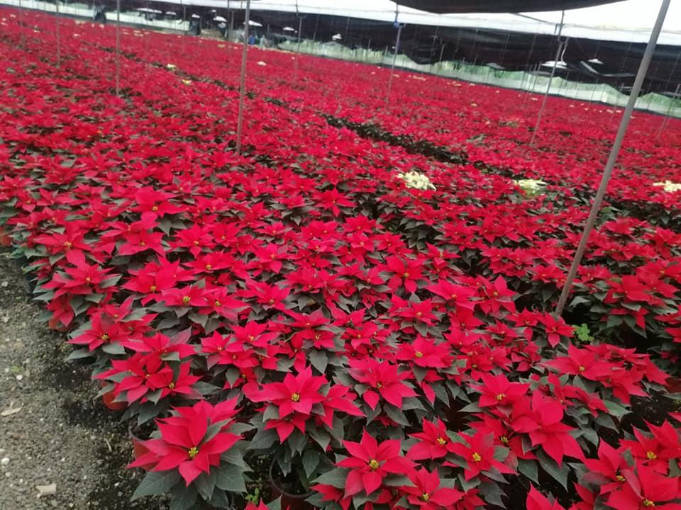Contiene imagen exterior, campo, flores color rojo
