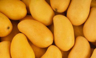 Contiene imagen de mangos