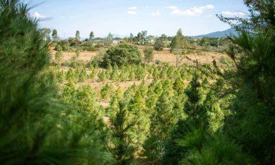Árboles de Navidad ambiental